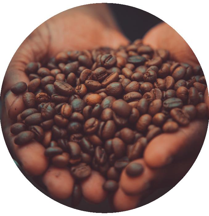 Gold Coast Roasters Coffee