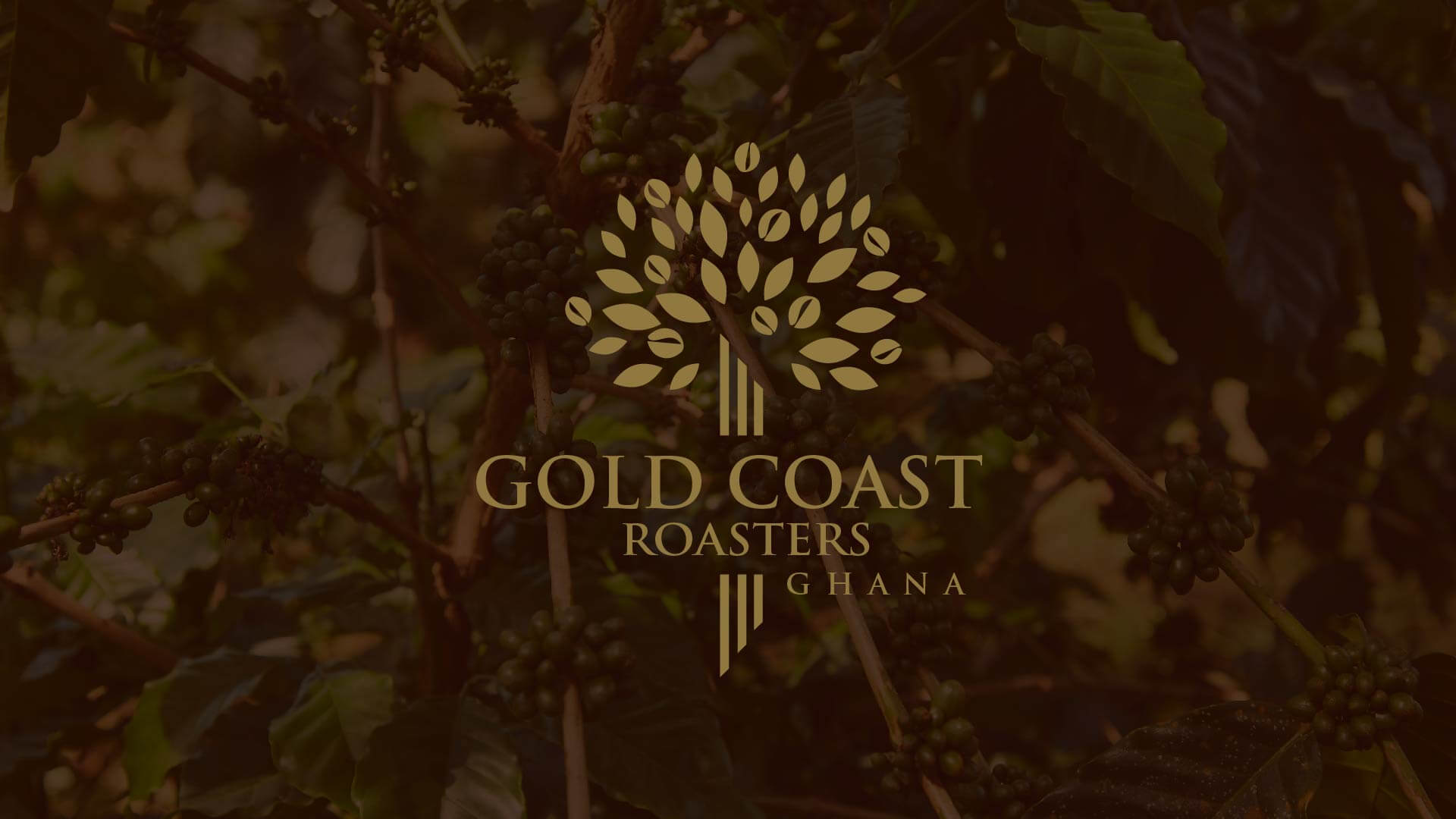 Gold Coast Roasters Coffee